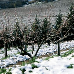 Angelucci Vini Italy Winter
